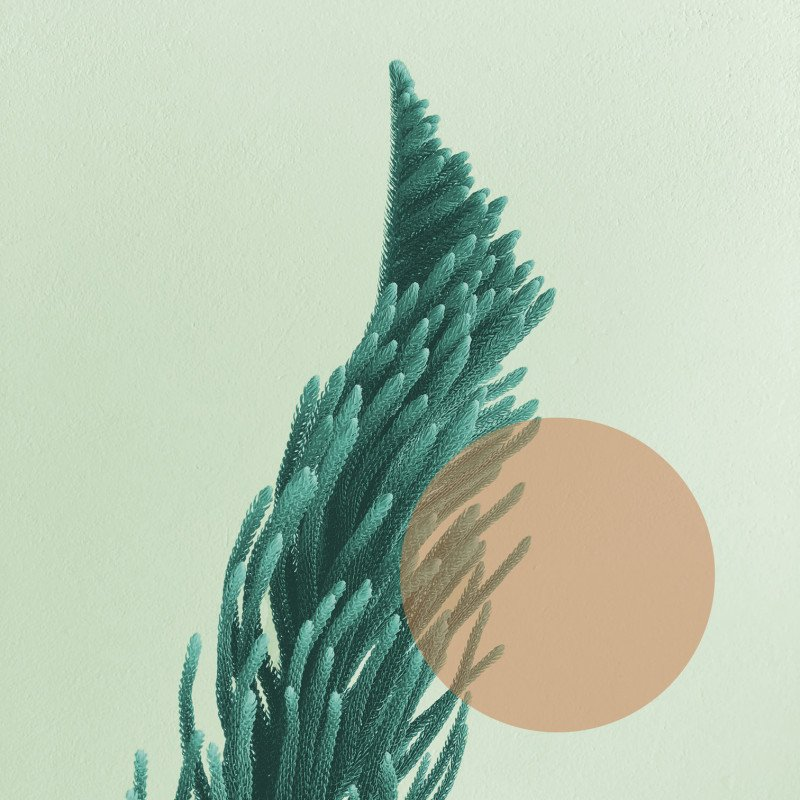An image with a fern-like plant looking like it is swaying in the wind
